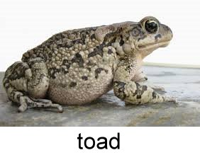 toad_332